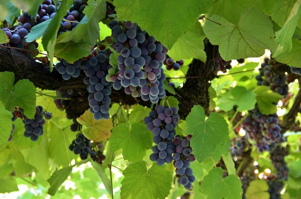 Conosci il vino? Mettiti alla prova con il test