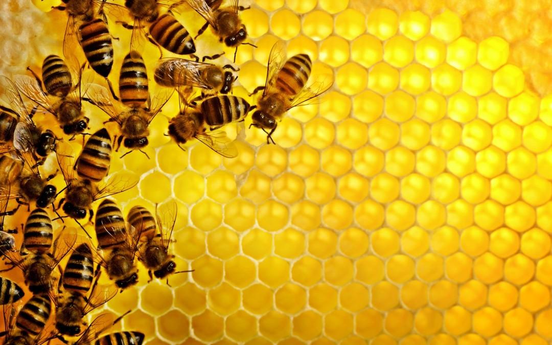 Nuovi mestieri: così si diventa apicoltore urbano (con un investimento iniziale di 500 euro)