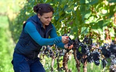 In agricoltura un'impresa su tre guidata da donne