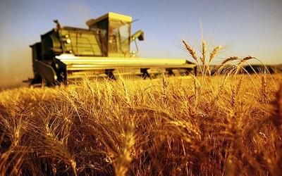 Ci salverà l'agricoltura?