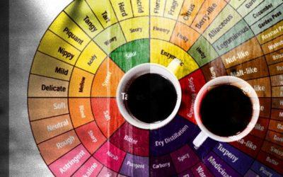 Il decalogo del caffè: ecco i dieci parametri per la valutazione