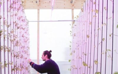 Arriva l'Ikea della serra, il kit fai-da-te per coltivare frutta e verdura in città