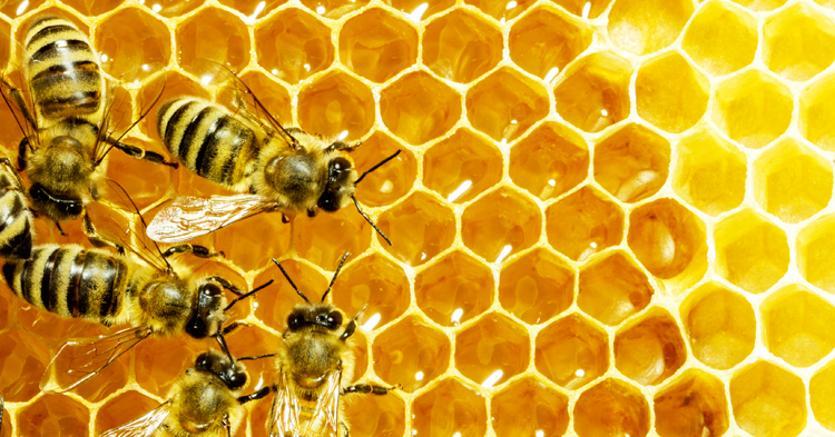 Senza api non c'è vita: in Usa nasce la prima banca genetica per preservare la specie