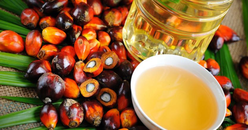 Olio di palma: nella querelle infinita ecco le ragioni dei pro e contro