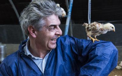No Ogm, no antibiotici, il pollo piemontese che cresce all'antica