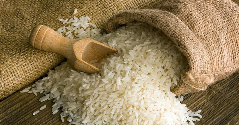 Vuoi diventare esperto di riso? Corsi specializzati a Vercelli