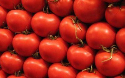 Energia verde dagli scarti di pomodoro: la super-batteria illumina fino a 70 km quadrati
